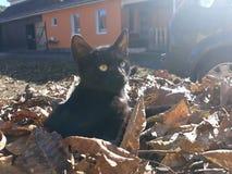 Mon chat noir image libre de droits