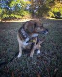 Mon chien étant appareil-photo timide Image stock