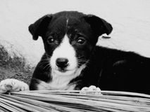 Mon chien image stock