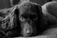 Mon chien Images stock