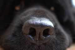 Mon chien Photographie stock