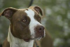 Mon chien Image libre de droits