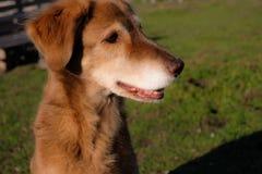 Mon chien de rouge de meilleur ami Image libre de droits