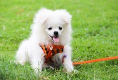 MON CHIEN EST PETIT ANIMAL MIGNON Images stock