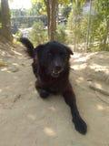 Mon chienchien noir Jackie photo libre de droits