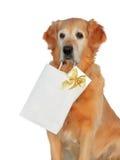 Mon crabot - â de chien d'arrêt d'or d'â images libres de droits