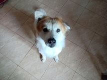 Mon emplacement de vert de nom de chien sur le plancher photos libres de droits