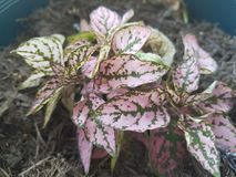 Mon jardin de lil Images stock