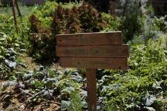Mon jardin de veggie Photos stock