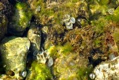 Mon jardin sous-marin Photo libre de droits