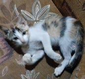 Mon Kitty Photo libre de droits
