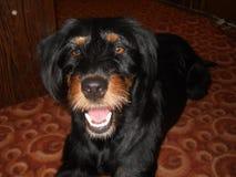 Mon meilleur chien photo libre de droits