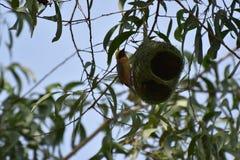 Mon nid c'est ma maison photos libres de droits