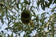 Mon nid c'est ma maison images libres de droits