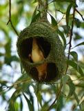 Mon nid c'est ma maison photo libre de droits
