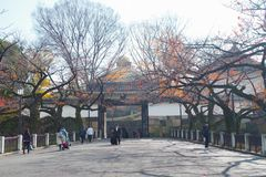Mon w Kitanomaru parku, Chiyoda, Tokio, Japonia Zdjęcia Royalty Free