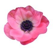 Mona Lisa flower Stock Image