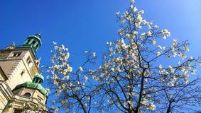 Monachium, Niemcy: Magnoliowy stellata drzewo i Bawarski muzeum narodowe Fotografia Stock