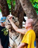Monaco buddista che alimenta con il latte una tigre di Bengala in Tailandia Immagini Stock Libere da Diritti