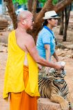Monaco buddista che alimenta con il latte una tigre di Bengala in Tailandia Immagine Stock