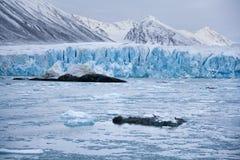 Monaco glaciär - Svalbard öar (Spitsbergen) Arkivbild