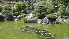 Monaco - Pond in Japanese garden stock video