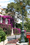 Monaco street France. A street in Monaco France showing flowers and trees Stock Photography