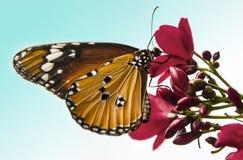 monarca Fotografia Stock