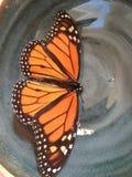 monarca Foto de archivo libre de regalías