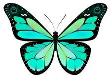 Monarca de la mariposa Imágenes de archivo libres de regalías