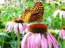 Monarca no jardim Fotos de Stock Royalty Free