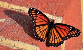 monarch imagem de stock