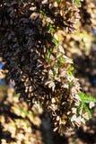monarch stockfoto