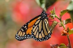 Monarch-Basisrecheneinheit stockfotos