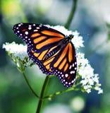 Monarch-Basisrecheneinheit Stockbilder
