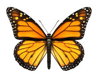 Monarch-Basisrecheneinheit Lizenzfreies Stockbild