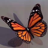 Monarch-Basisrecheneinheit Stockfotografie