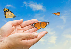 Monarch butterfies in hands. Close up of monarch butterflies in hands Stock Photo
