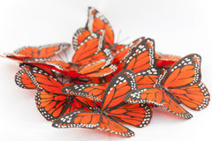 Monarch butterflies. Isolated on a white background Royalty Free Stock Photography