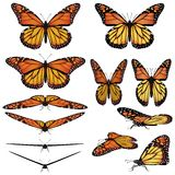 Monarch butterflies. Monarch butterfly in several different views and poses Royalty Free Stock Photos
