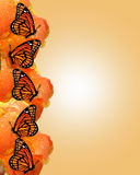 Monarch butterflies border Stock Images