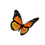 Monarch butterfly. Illustration of a monarch butterfly isolated on white Stock Photos