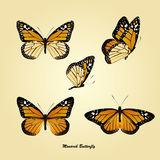 Monarch Butterfly. Illustration of monarch butterfly set Royalty Free Stock Image