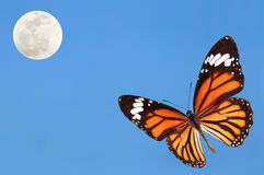 Monarch butterfly. With blue sky and the moon stock photo