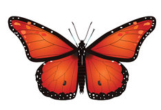 Monarch Butterfly. Raster illustration of a monarch butterfly isolated on white Stock Images