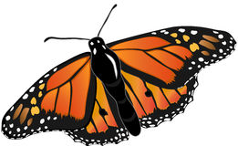 Monarch butterfly. Illustration of a monarch butterfly of orange and black colors Stock Images