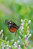 Monarch butterfly. (Danaus plexippus) on a flower in summer stock photos