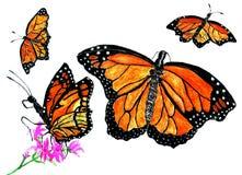 Monarch Butterfly Art Stock Image