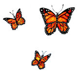 Monarch Butterfly Art Royalty Free Stock Photos