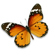 Monarch butterfly. Beautiful monarch butterfly isolated on white background Royalty Free Stock Images